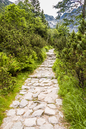 View of the mountain trail for hiking through pine forest, landscape in the summer, Tatra Mountains, Poland