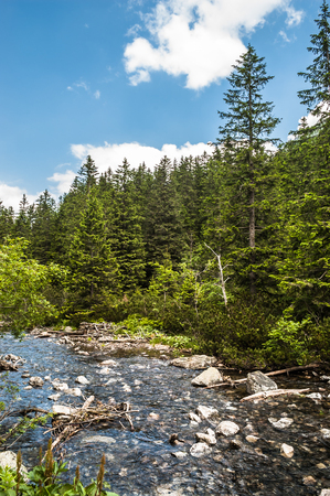 Mountain river in the valley and evergreen pine forest in mountains, landscape