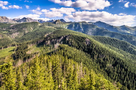 Landscape of Tatra Mountains covered forest, view from the top of Nosal. Beautiful panorama with peaks on the blue sky background, Zakopane, Poland