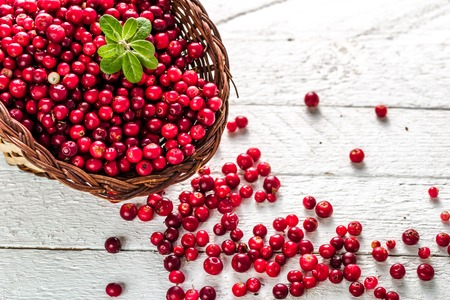 Basket of fresh cranberry on wooden table, red berries also called cowberry or lingonberry on white background Archivio Fotografico