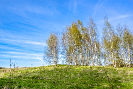 Grass field and trees, green spring landscape with blue sky Stock Photo