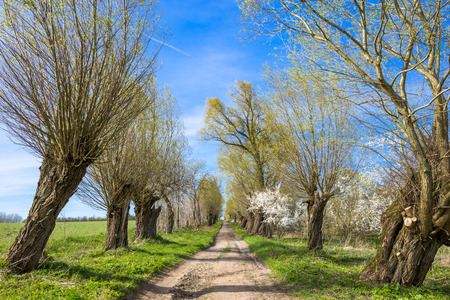 Spring landscape with country road and old trees Stock fotó