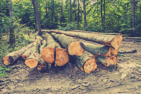 Pile of wood in the forest with green background of deciduous trees, vintage photo.