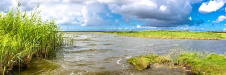 Spring nature panorama of lake and sky with grass in the water, wetlands area