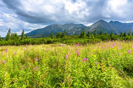 Green landscape of hills and sky. Meadow with lush grass at spring in mountains, Carpathians, Tatra National Park in Poland Stock Photo