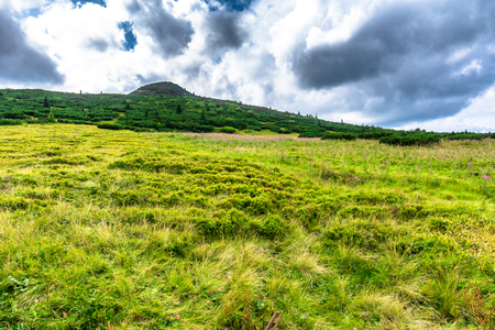 Green landscape of hills and sky. Meadow with lush grass at spring in mountains, Carpathians, Tatra National Park in Poland Banco de Imagens