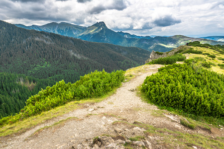 Hiking trail on mountain ridge covered forest in the Tatra Mountains, summer, traveling landscape