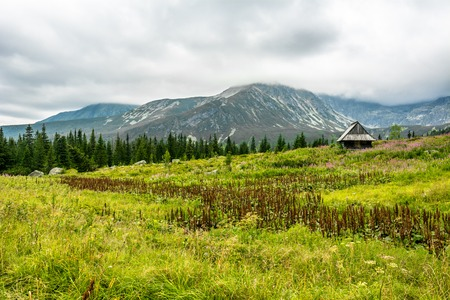 Wooden hut in mountains, landscape of green spring grass field on mountain meadow, Hala Gasienicowa, popular tourist attraction in Tatra National Park, Poland Stock Photo