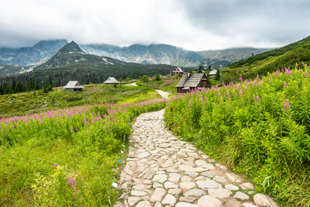 Hiking trail in mountains, landscape of houses in mountain valley with flowers in summer grass field, Hala Gasienicowa, popular tourist attraction in Tatra National Park, Poland