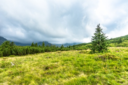 Green landscape in mountains, hills, pine trees and meadow with spring grass, Carpathians, Tatra National Park in Poland Stock Photo - 94010539