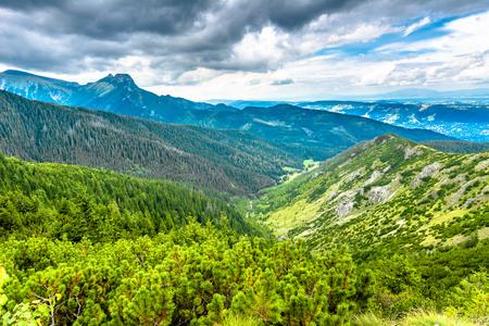 森と山、空を背景に山の頂上を持つ風景