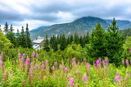 House in mountain forest, landscape of mountains and flowers, panoramic vista Stock Photo