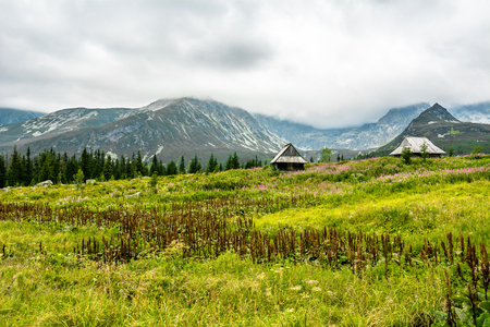 Houses in mountains on grass field, green spring landscape of mountain meadow, Hala Gasienicowa, popular tourist attraction in Tatra National Park, Poland