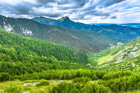 緑の森と山々、空に山の頂上を持つパノラマ 写真素材