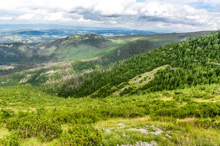 Green mountain forest, panoramic vista of hills and pine trees from above, Tatra Mountains, landscape