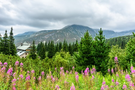 House in mountain forest, green landscape with panorama of mountains and flowers, summer scenic view Stock Photo