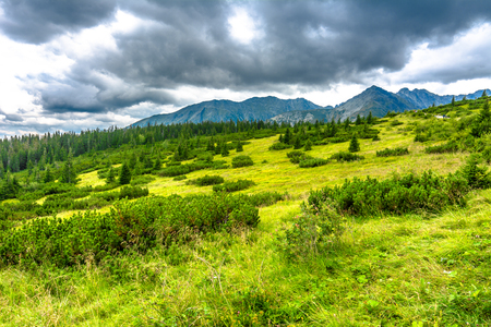 Green landscape of grass, trees and mountains on the sky background, Carpathians, Tatra National Park in Poland
