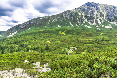 Panoramic view of mountain forest, landscape of green area in highlands