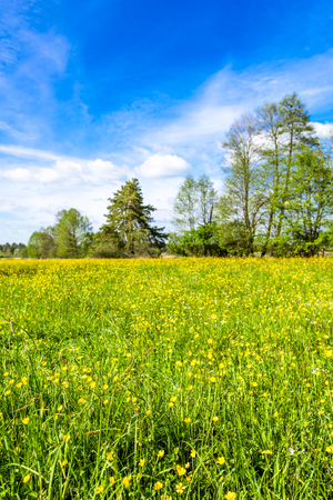 Landscape of spring meadow with flowers, grass and green trees on field
