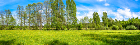 Flowers in grass, field and trees, green spring panorama