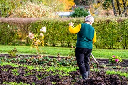 Woman gardener working in the garden or farmer fertilizing the soil with a natural fertilizer, organic farming concept Stockfoto