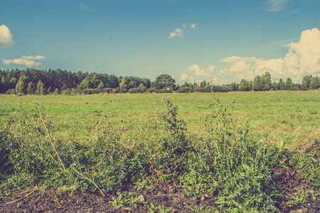 Rural landscape of pasture on wetlands with forest in the background and thistle in foreground, vintage photo. Stock Photo - 97878799