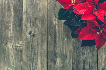 Christmas card with decoration, christmas poinsettia red flower on wooden background