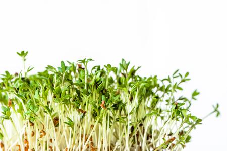 Verse micro greens, zaad spruiten voor salade, gezonde voeding en schoon eten concept