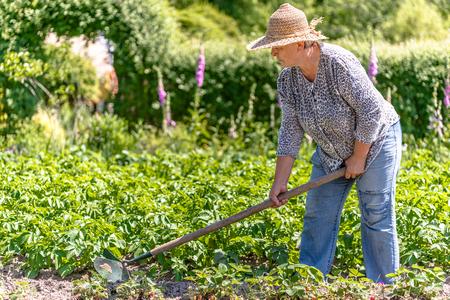 Summer gardening - woman working on farm of potatoes, organic farming concept