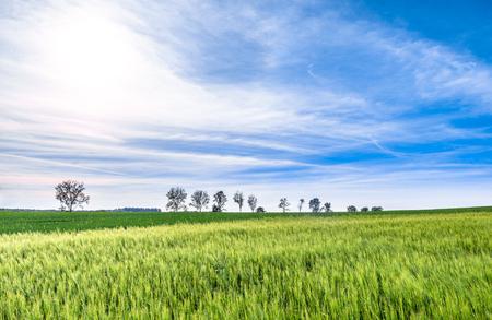 Grass field, green farmland landscape