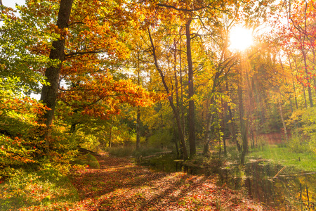 Forest in autumn, landscape with sunset. Sun shining through trees. Stock Photo