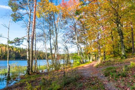 Path through forest in autumn, landscape Stock Photo