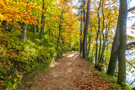 Autumn forest scenery with path and trees