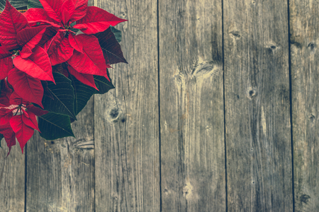 Christmas decoration with poinsettia on wooden background 版權商用圖片