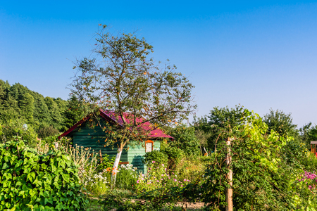 Wooden cottage and home garden at countryside in the summer Фото со стока - 102994912