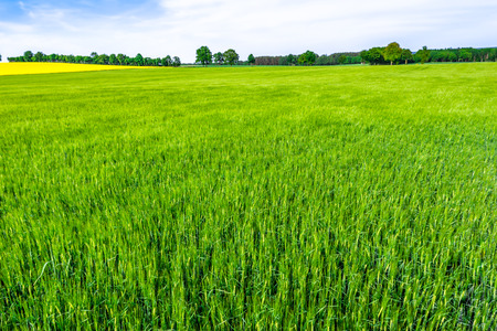 Grass field, green farm, landscape