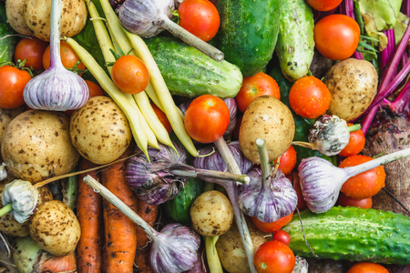 Assortment of vegetable, background with fresh vegetables, organic produce freshly harvested from the garden