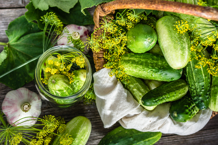 Preparation pickling cucumber. Fresh herbs, dill, garlic and cucumbers in jar. Preserves for winter.