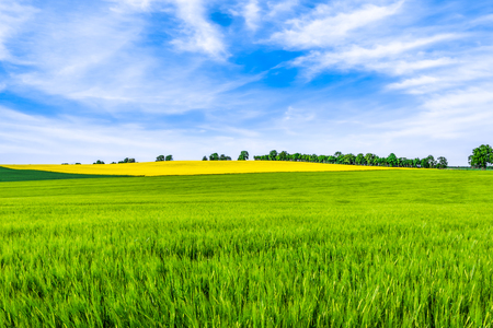 Spring field scenery and blue sky over fields, green farm, landscape