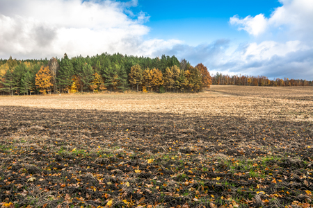 Landscape of autumn field and plowed land, farm agricultural scenic view with yellow trees illuminated with sunlight and cloudy sky