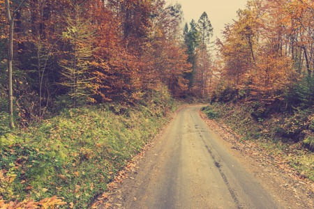 Landscape of autumn forest, road covered with fallen leaves from deciduous trees, toned image