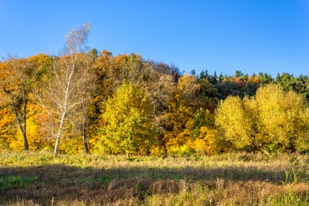 Colorful autumn landscape, forest with golden trees and blue sky in sunny day