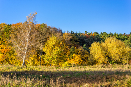 Sunny landscape of autumn, forest with yellow trees nd blue sky Stock Photo