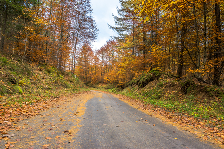Landscape of autumn forest, country road in nature, landscape Stock Photo