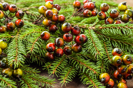Green fir background with christmas decoration