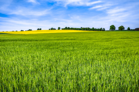 Spring farm field with grass, green landscape with blue sky and trees Stock Photo