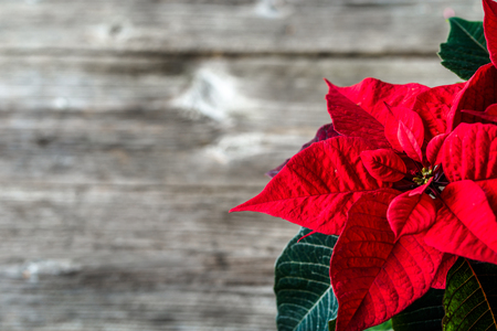 Christmas background with red decoration, christmas poinsettia flower on wooden table