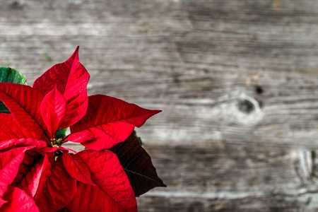 Christmas wooden background with poinsettia flower on wood