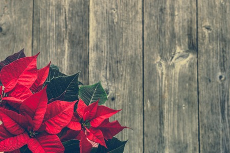 Christmas wooden background with poinsettia flower, top view