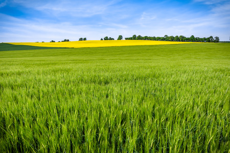 Green fields and sky. Grass field, panoramic view of farmlands, spring landscape. Stock Photo
